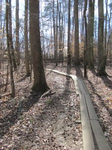 A planked section of trail